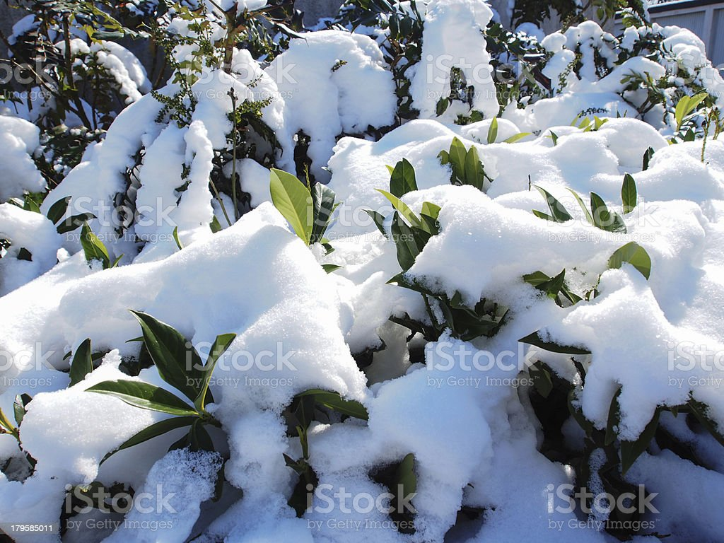 first snow royalty-free stock photo