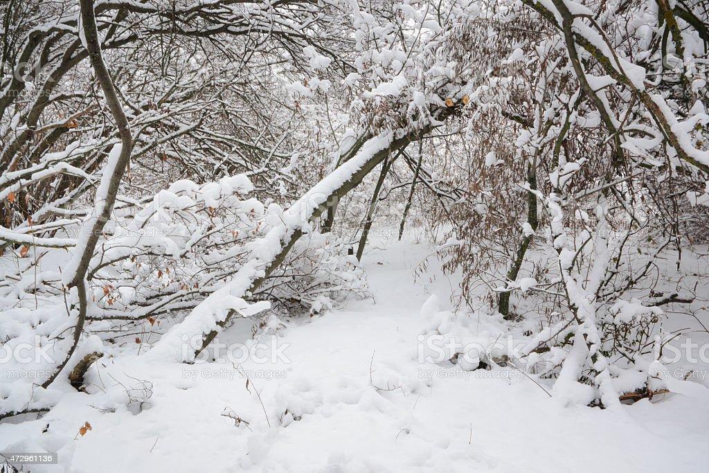 Primera la nieve foto de stock libre de derechos