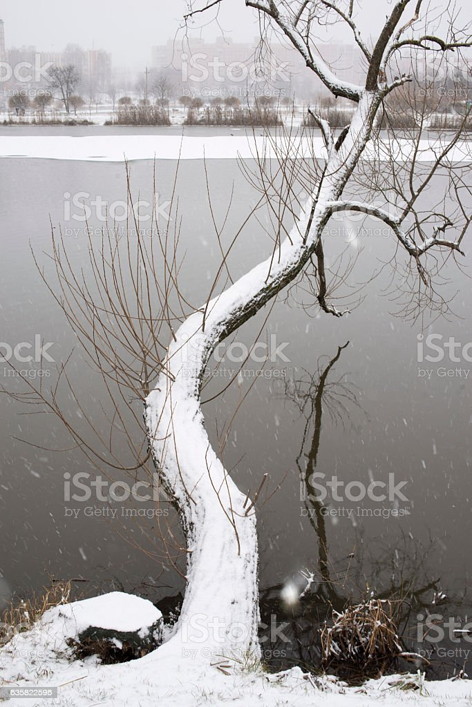 first snow tree stock photo