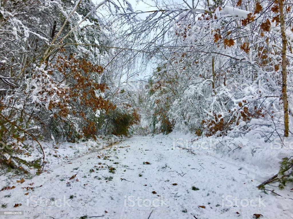 First Snowfall stock photo