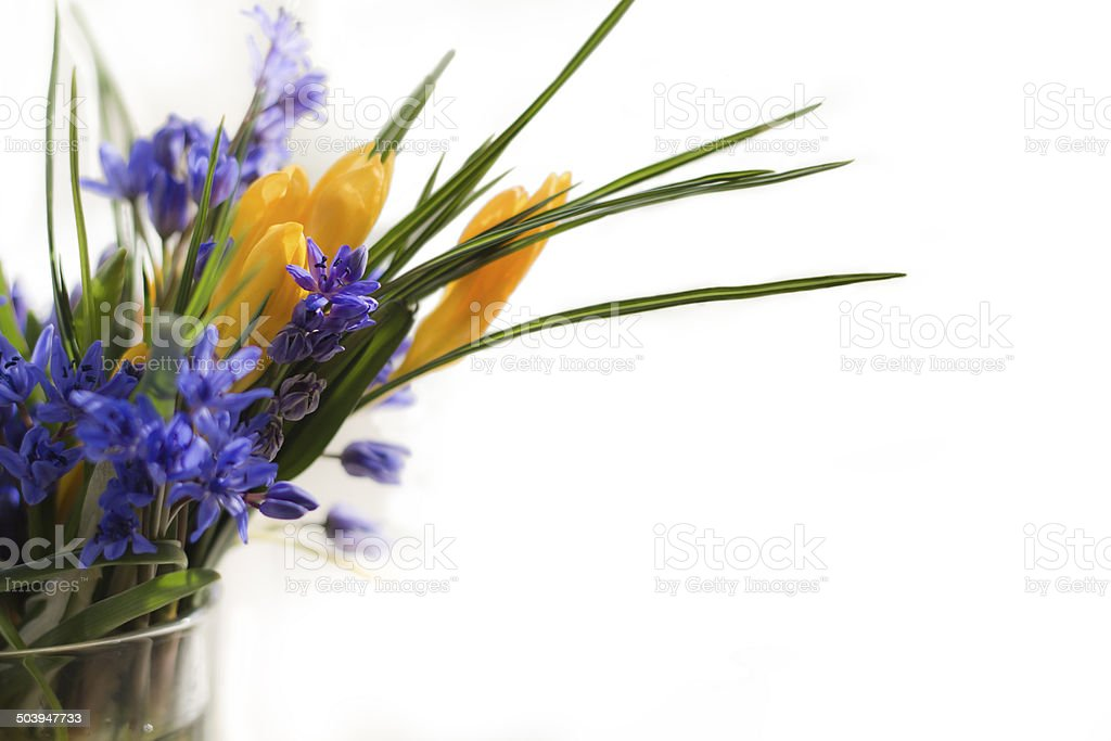 First spring flowers in a vase stock photo