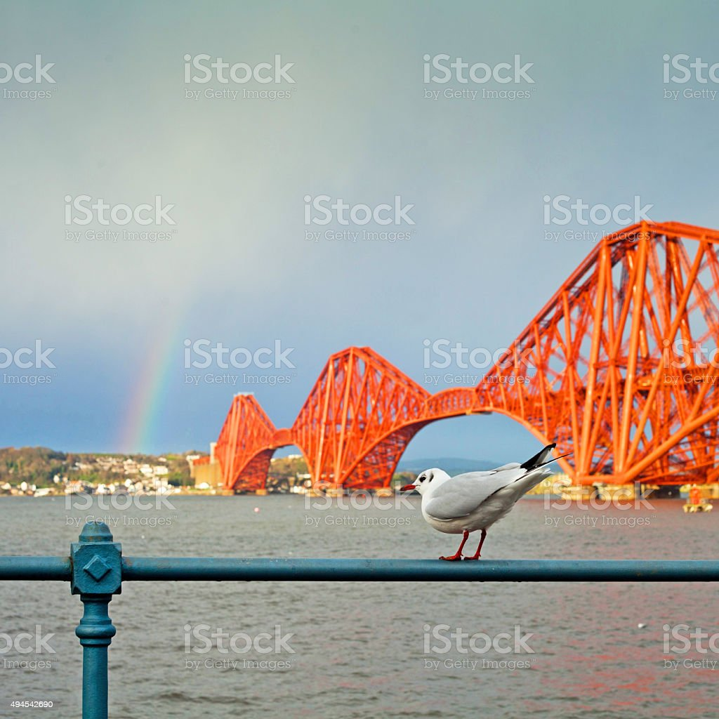 Firth of Forth Rail Bridge with seagul stock photo