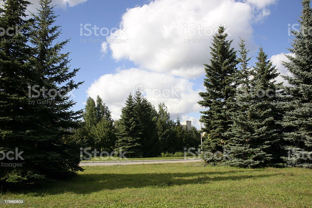 Fir-wood stock photo