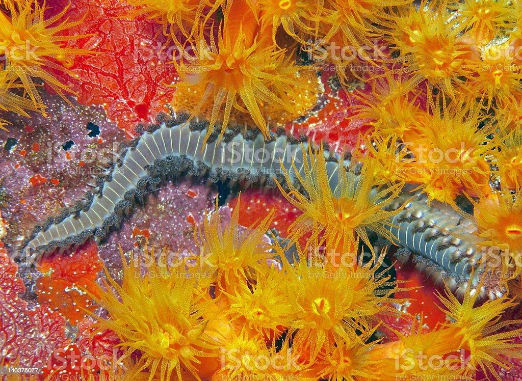 Firworm stock photo