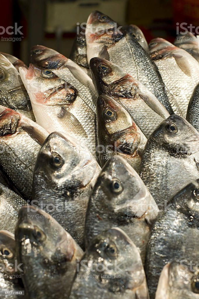 fisch on bench stock photo