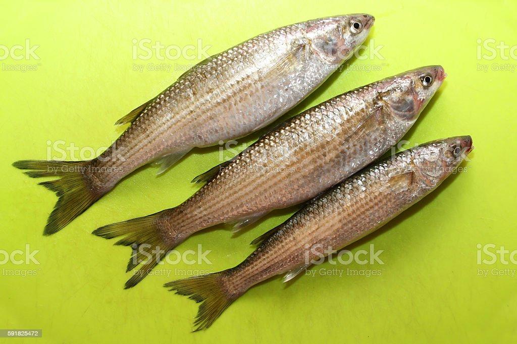 Fisch stock photo