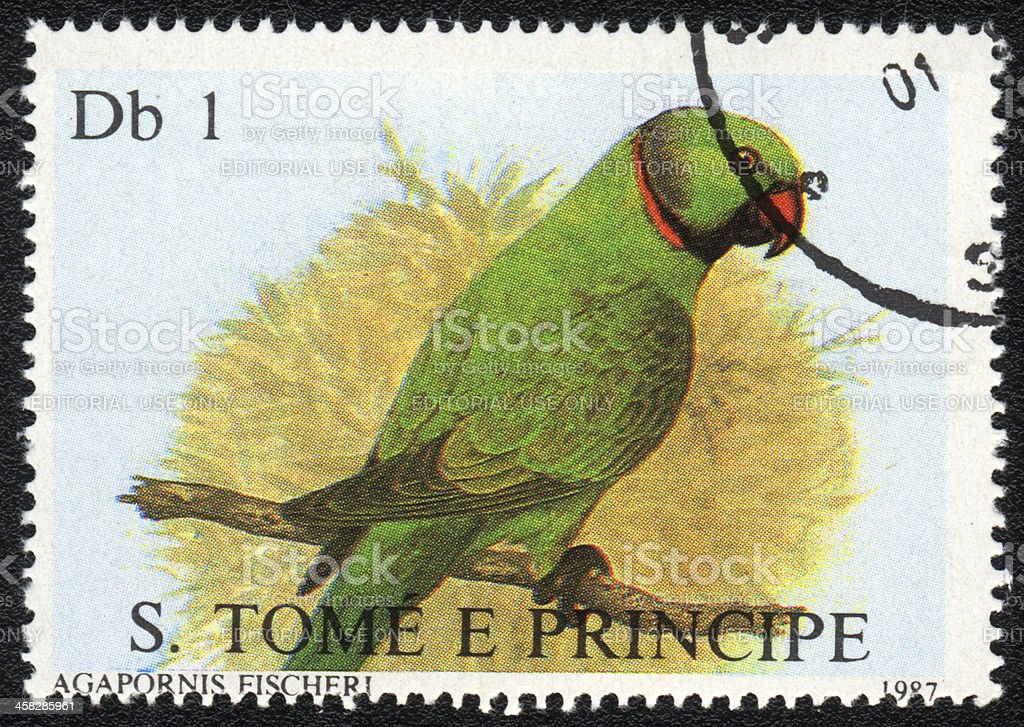 Fischer's Lovebird royalty-free stock photo
