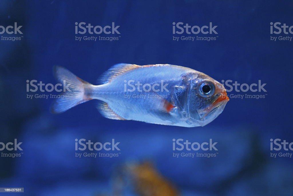 Fish 26 stock photo