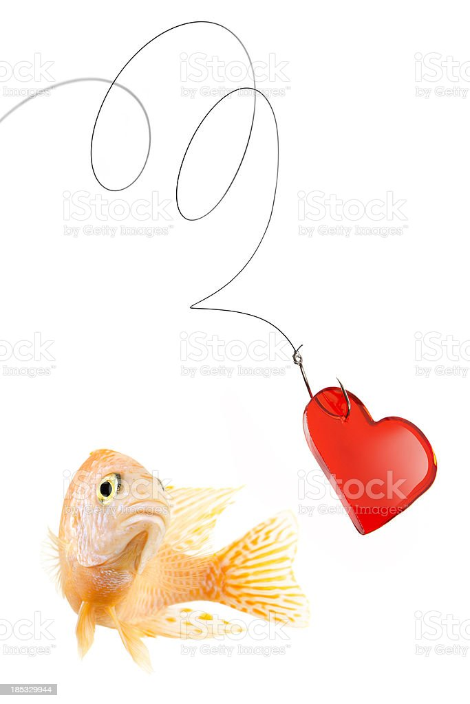 Fish about to bite fishing bait with red heart isolated stock photo