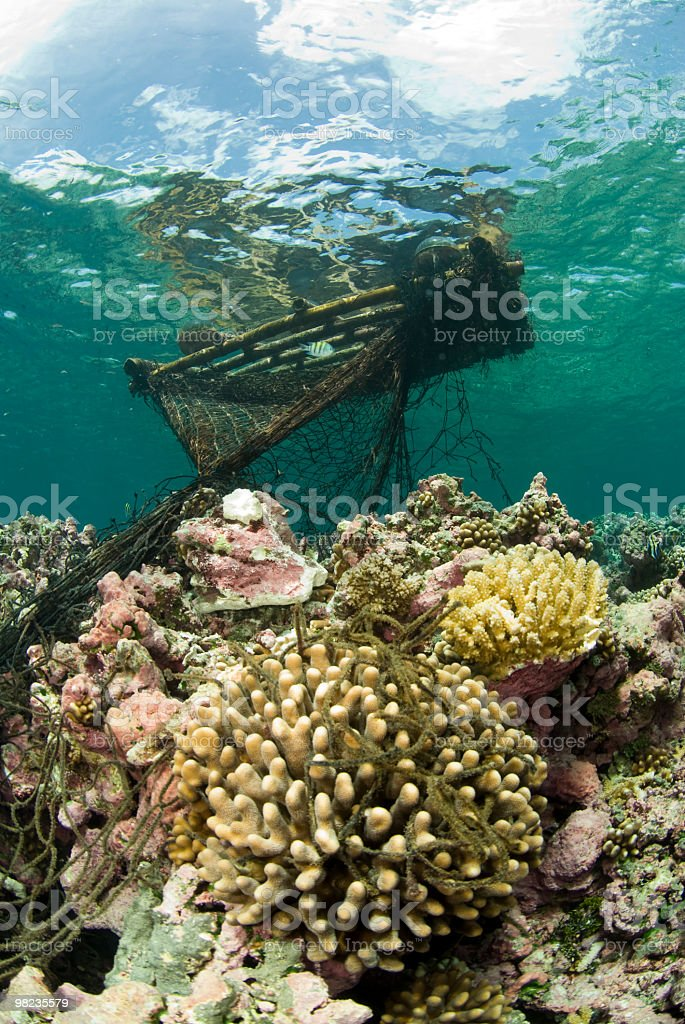 fish aggregation device stuck on coral reef stock photo