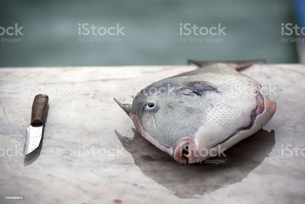 fish and a knife stock photo