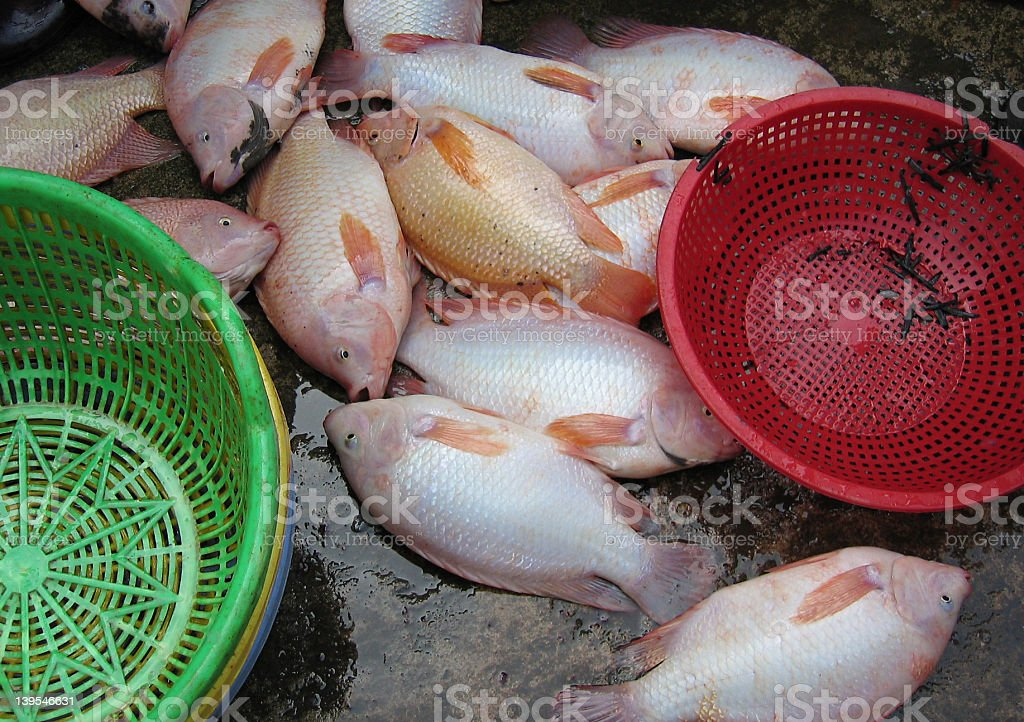 fish and baskets royalty-free stock photo