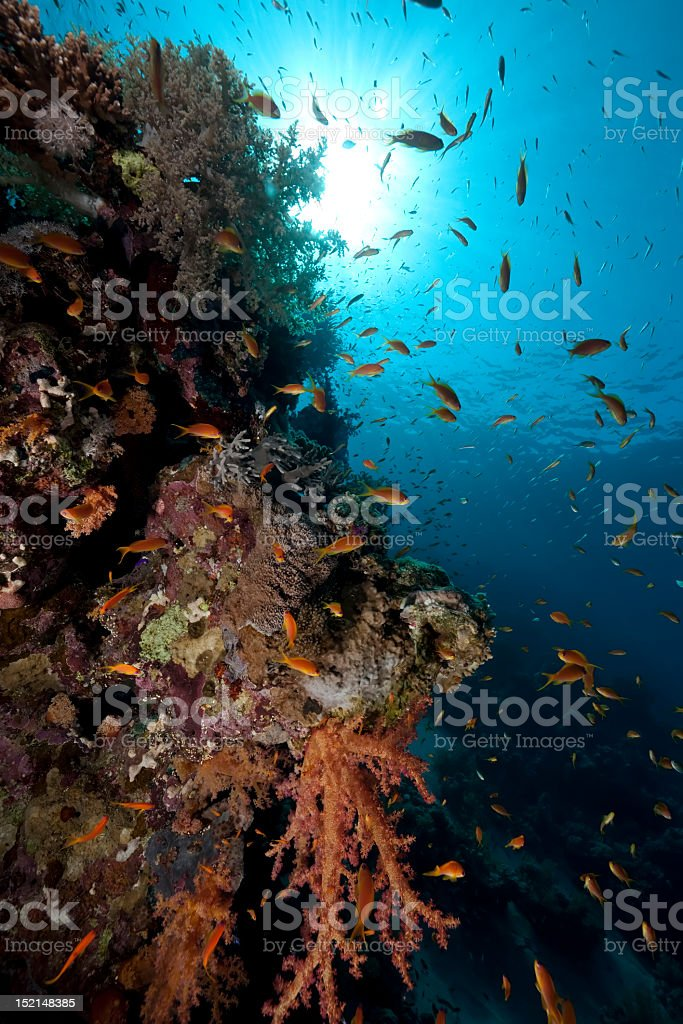 fish and blue ocean royalty-free stock photo