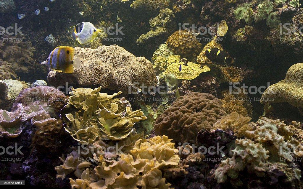 Fish and Coral in Aquarium stock photo