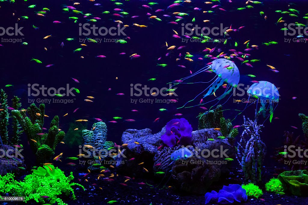 Fish and jellyfish in the aquarium. stock photo