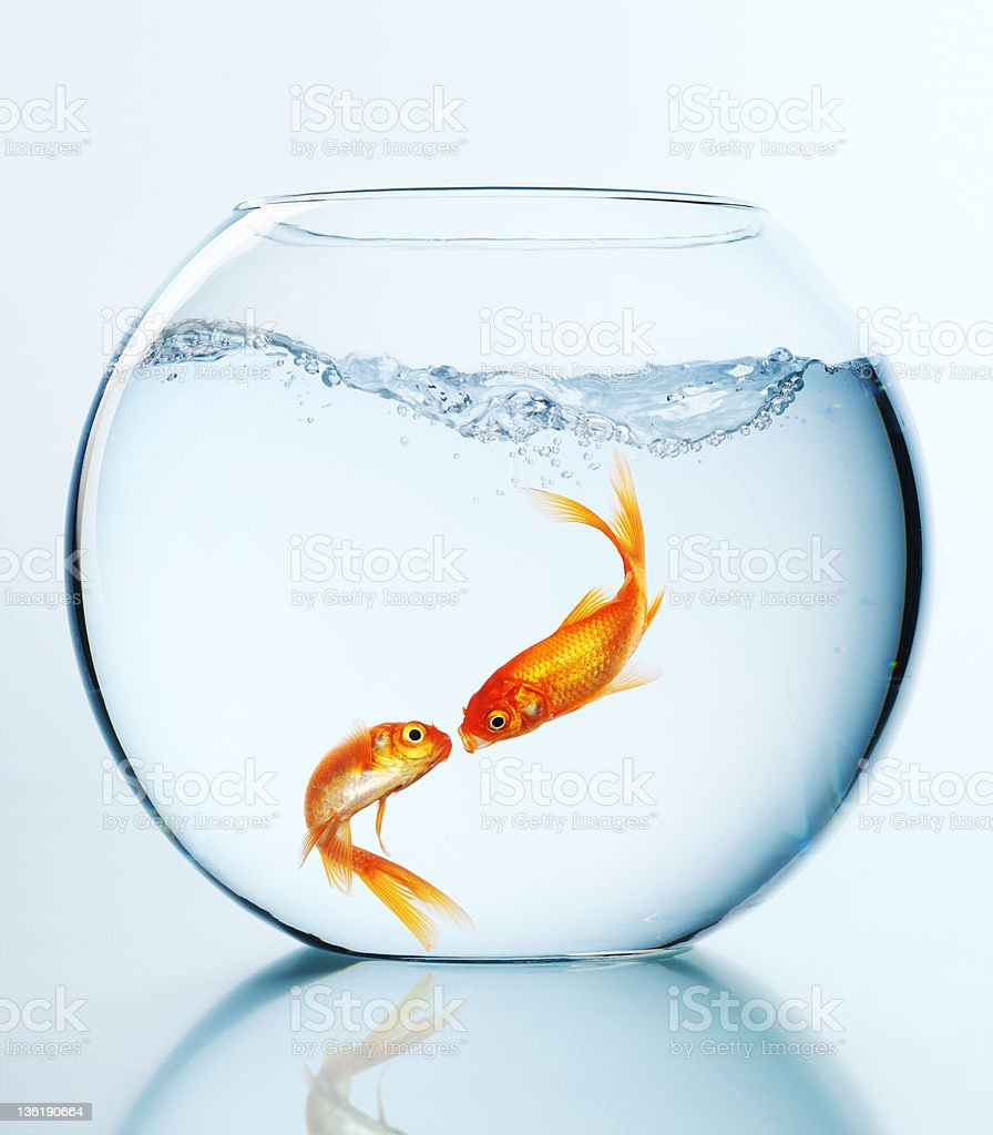 Fish and love royalty-free stock photo