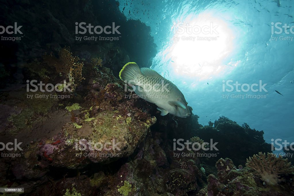 fish and ocean royalty-free stock photo