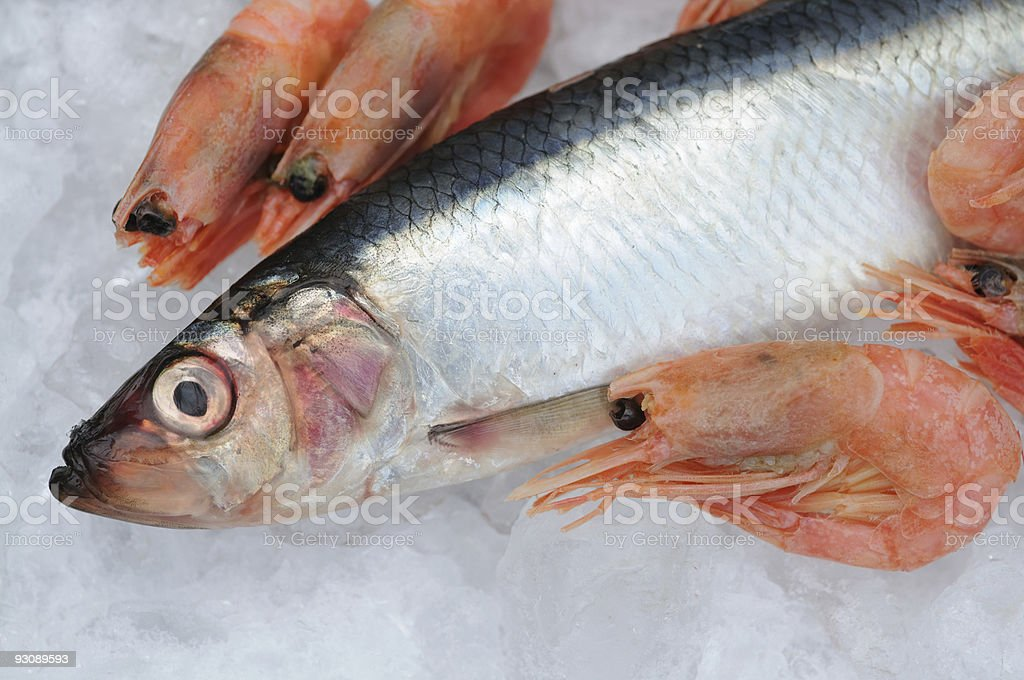 Fish and Shrimps royalty-free stock photo