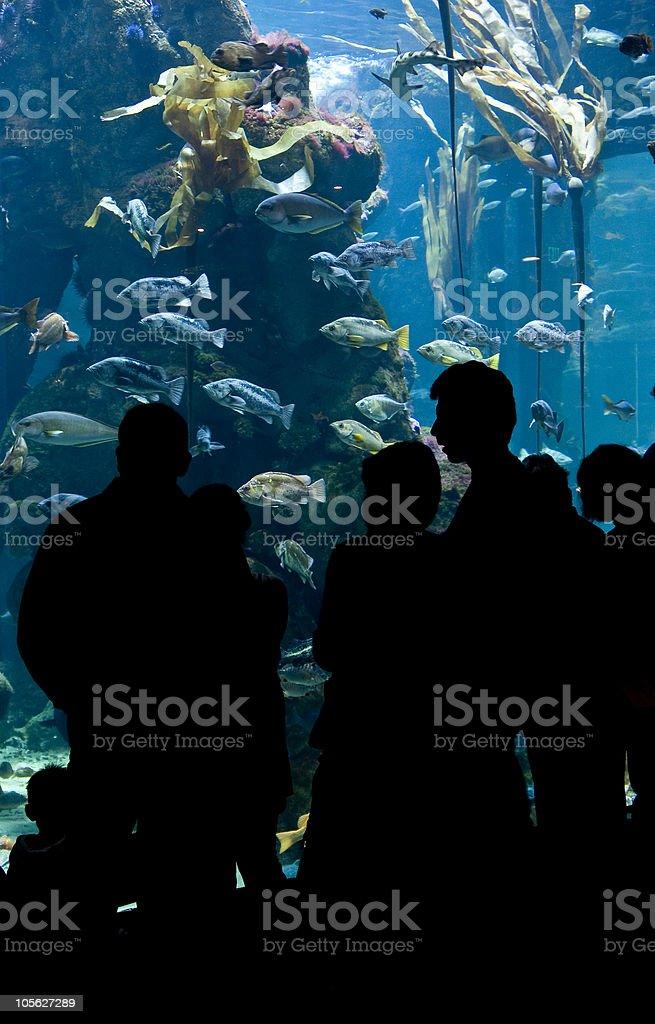 Acuario peces foto de stock libre de derechos
