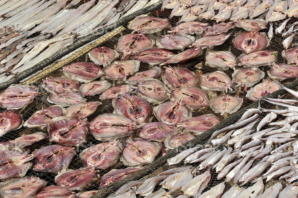 Fish being sun-dried stock photo