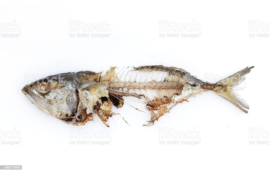 fish bone stock photo