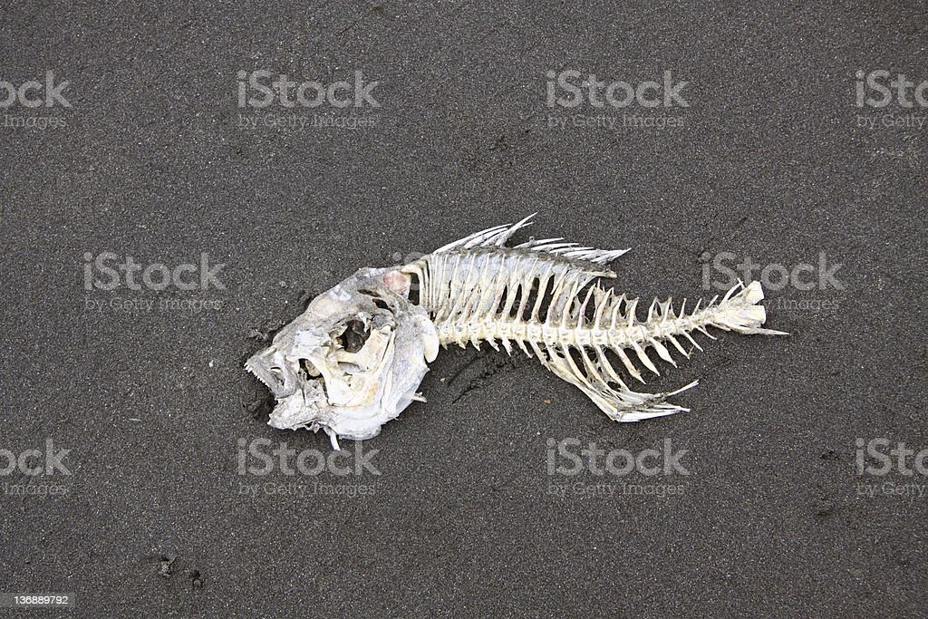 Fish Bones royalty-free stock photo