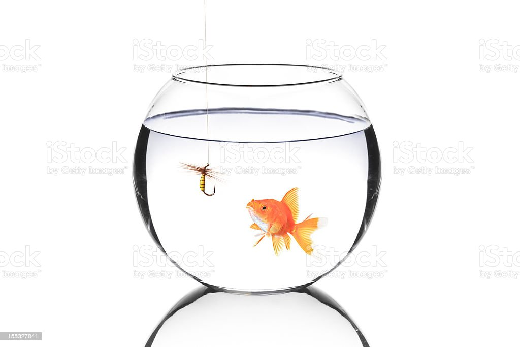 Fish bowl with a fishing hook stock photo