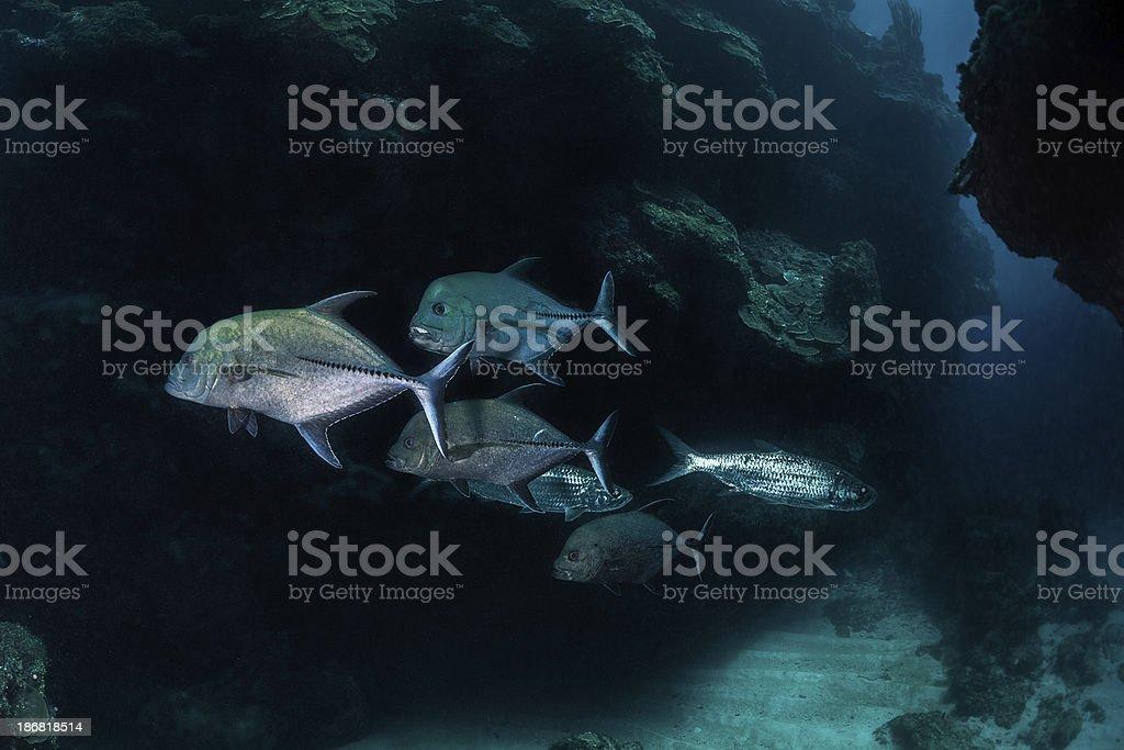 Fish buddies royalty-free stock photo