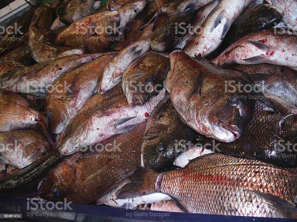 Fish carnage royalty-free stock photo
