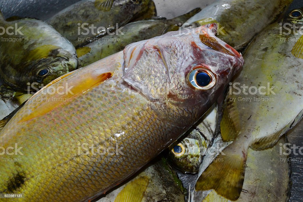 fish catch stock photo