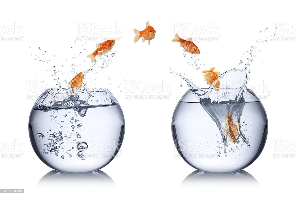 fish change concept stock photo
