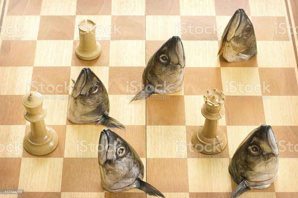 Fish Chess stock photo