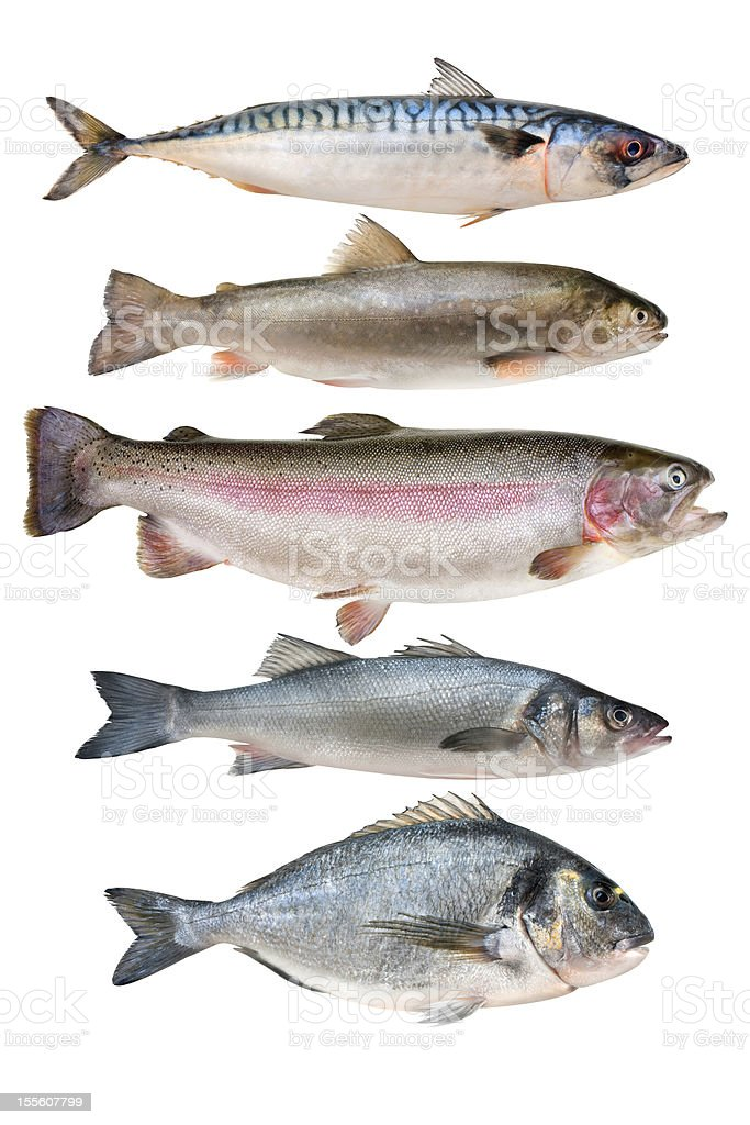 fish collection royalty-free stock photo