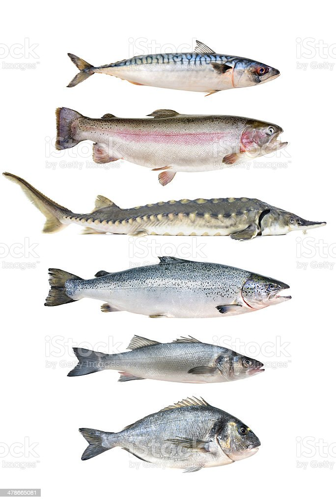fish collection stock photo