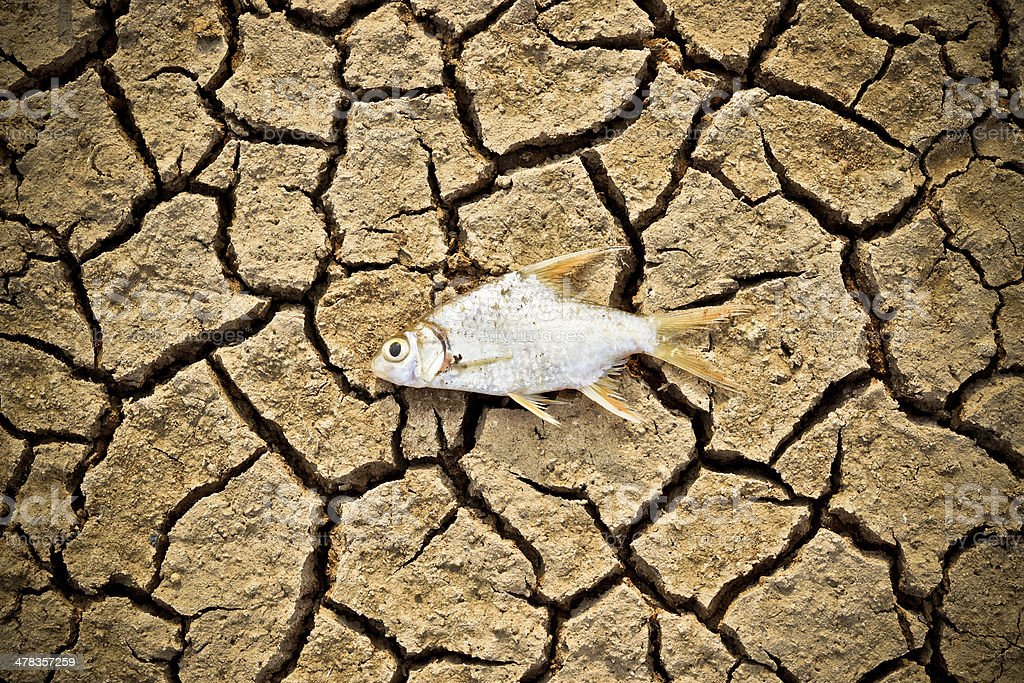 fish died on cracked earth stock photo