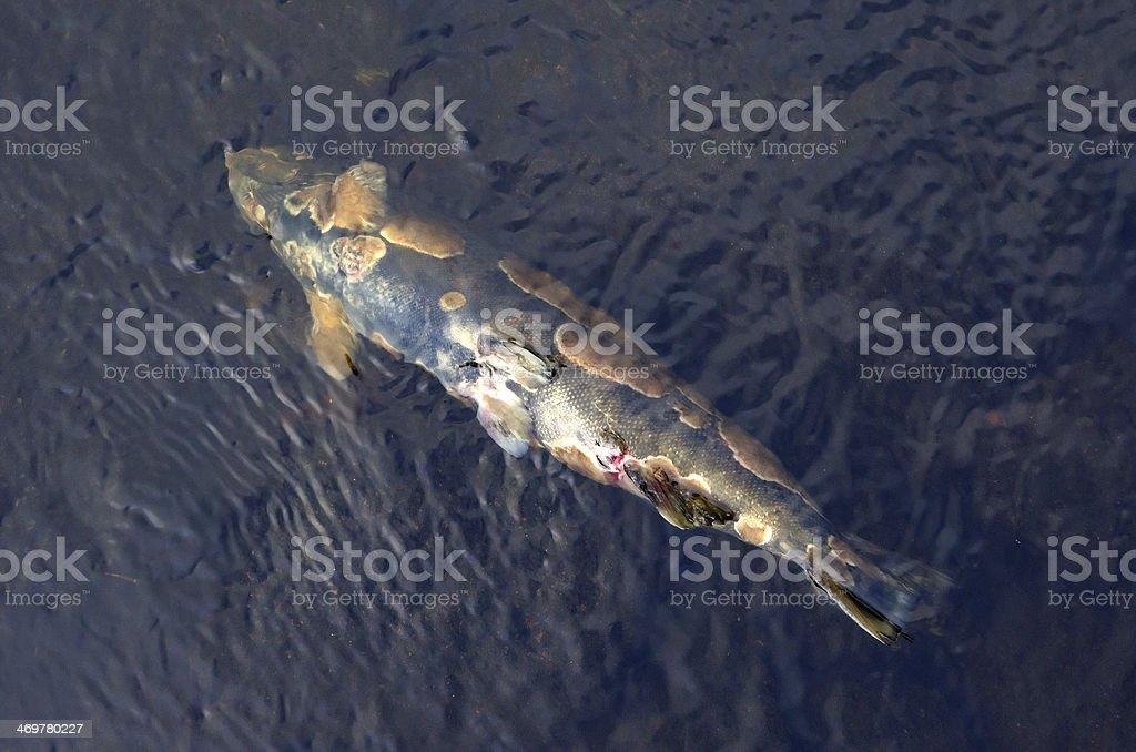 Fish disease stock photo