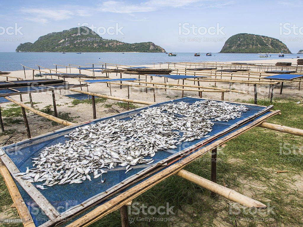 Fish dry in the sun royalty-free stock photo