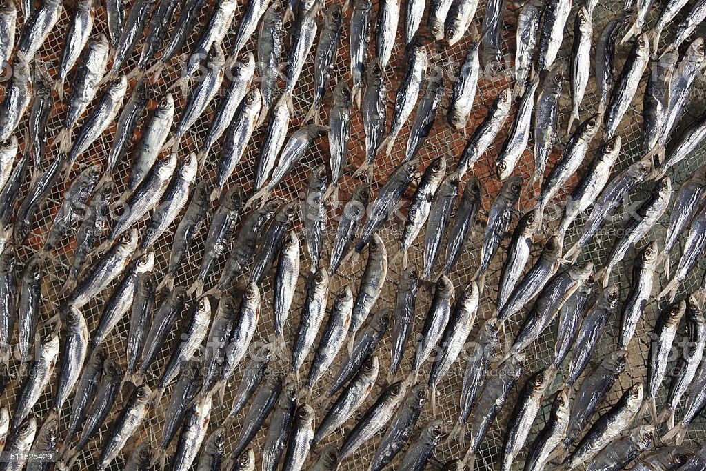 Fish dry on a lattice royalty-free stock photo