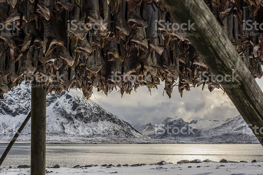Fish drying station stock photo