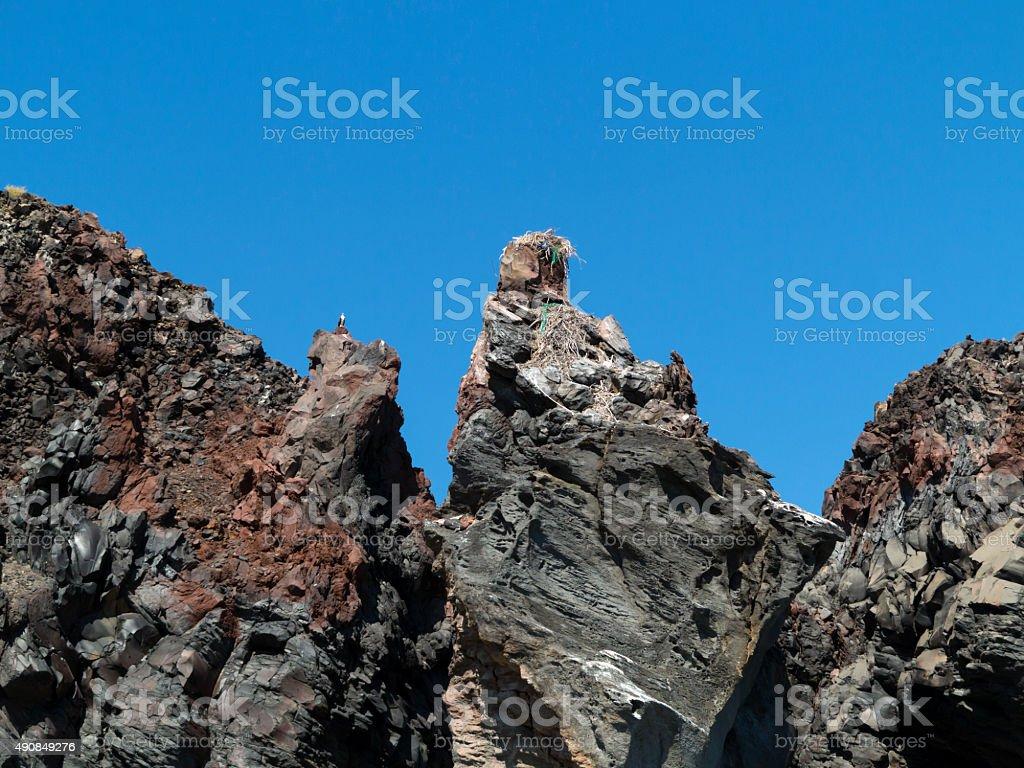 Fish Eagle on cliff stock photo