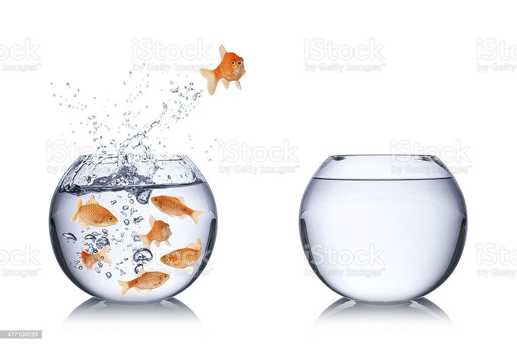 fish escape concept stock photo