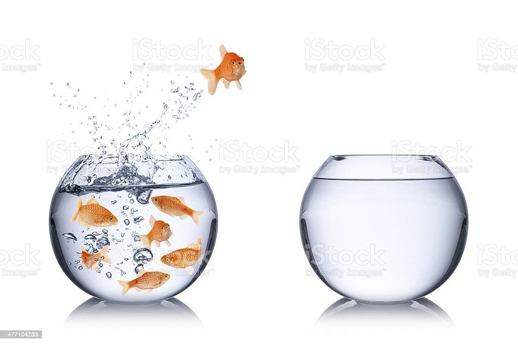 fish escape concept stock photo