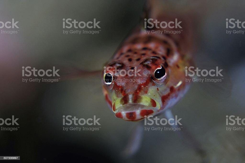 Fish eyes stock photo