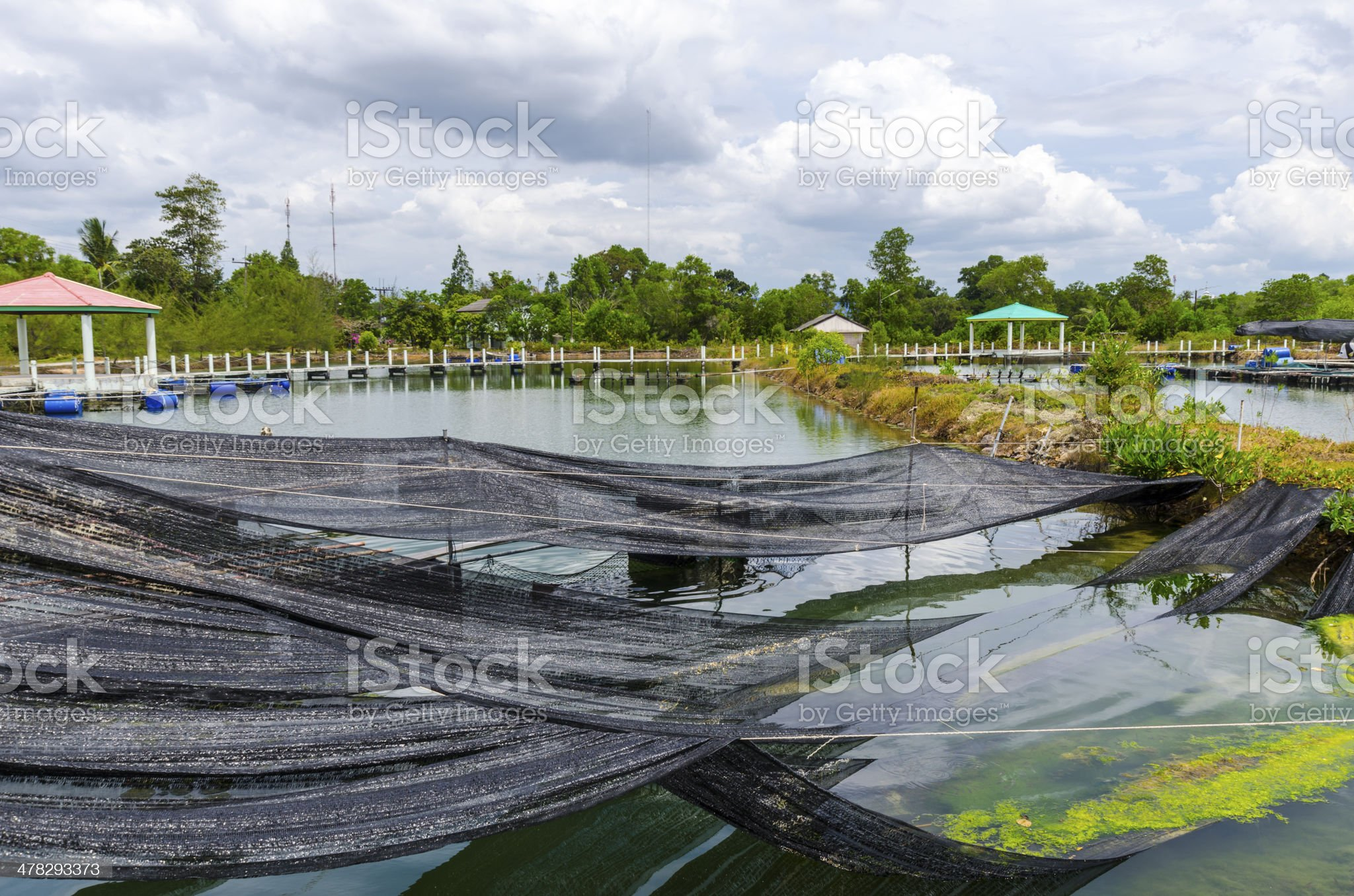Fish farm in Thailand. Wooden bridges and ponds royalty-free stock photo