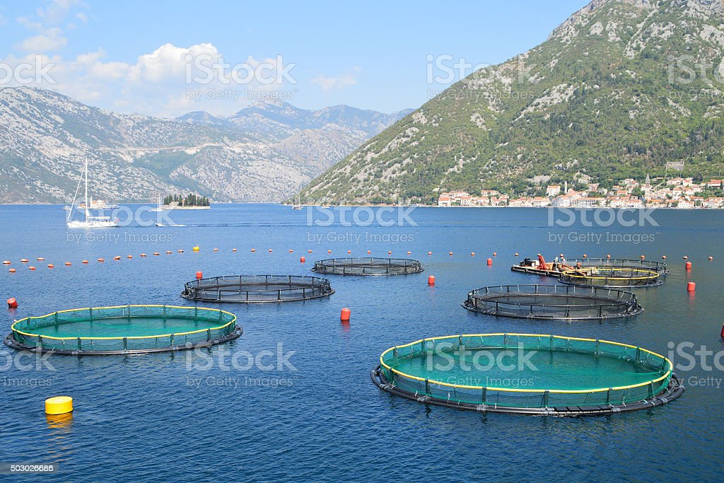 Fish farm in the bay of Kotor, Montenegro stock photo