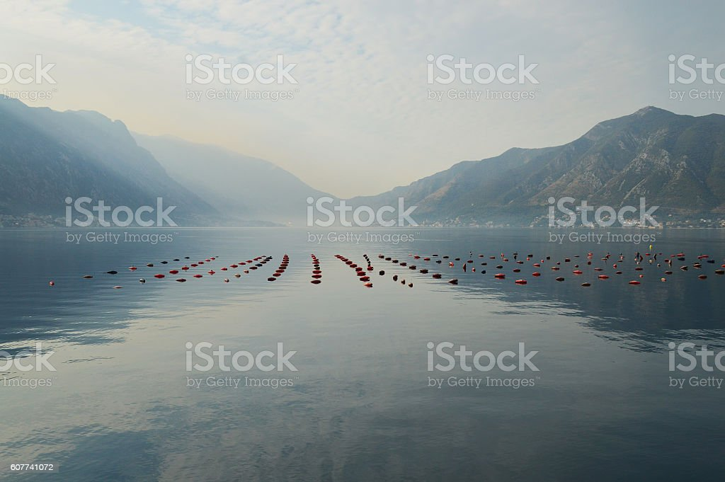 Fish farm in the bay of Kotor, Montenegro stock photo