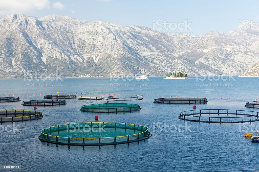 Fish farm in the Bay of Kotor stock photo