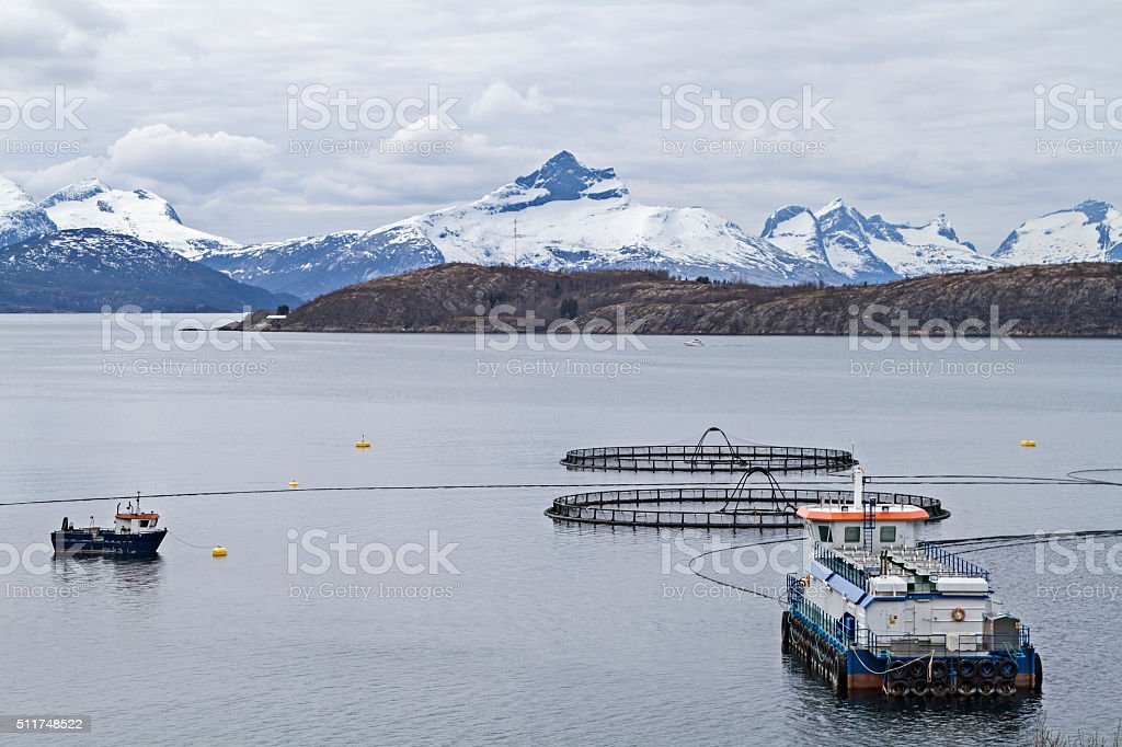 Fish farm in the fjord stock photo