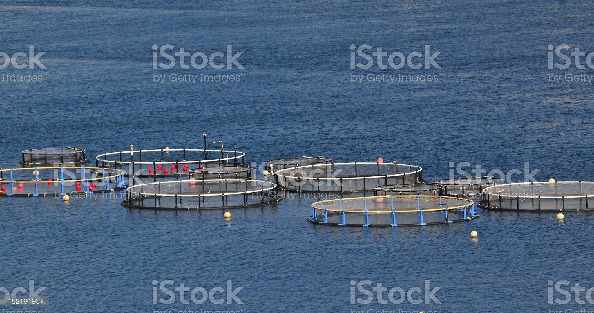 Fish Farm royalty-free stock photo