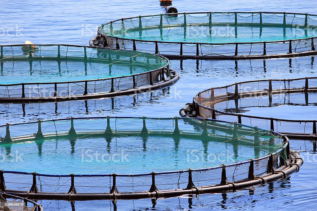 Fish farm stock photo